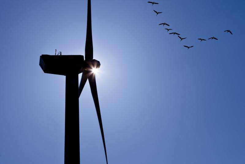 Renzi, 9 miliardi di euro alla lobby delle rinnovabili