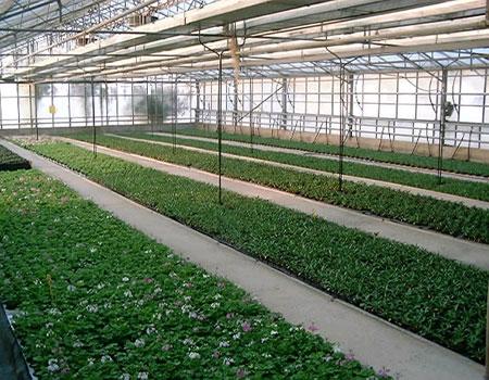 L impianto a biomassa che taglia i consumi energetici for Serra agricola usata